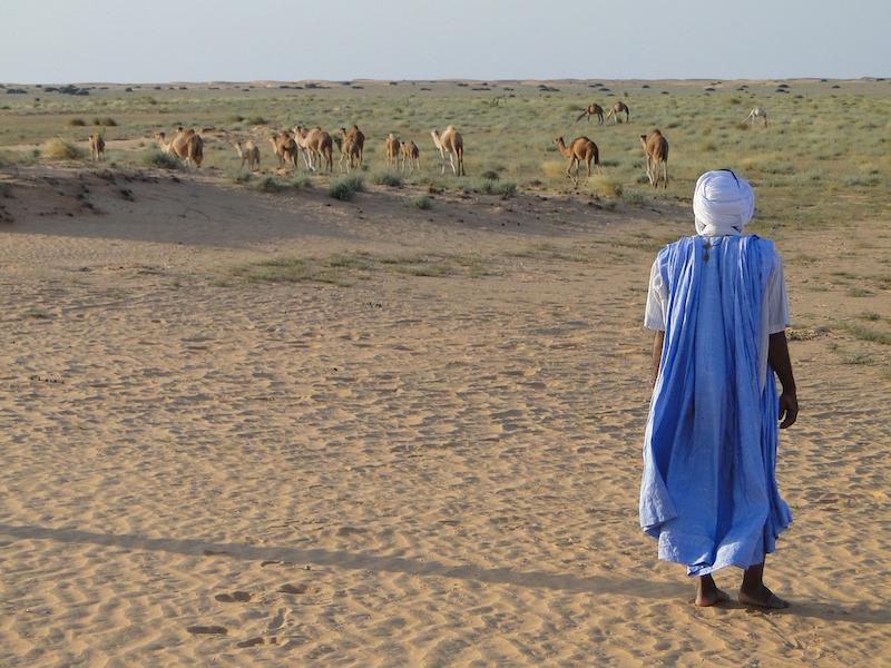 North Africa Testimony
